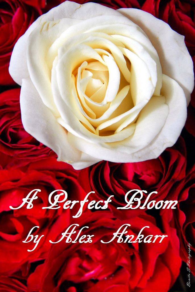 a perfect bloom IMAGE